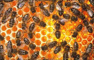 Bee_hive_spl470_470x303