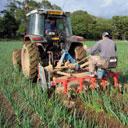 Farm-weeding